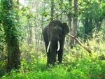 ہندوستان میں جنگلی ہاتھی نے 15 افراد کو ہلاک کردیا