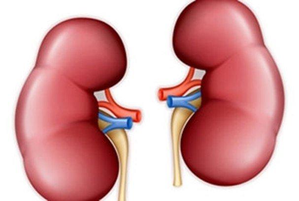 رصد انواع سلول در کلیه برای تکوین اندامها ممکن شد