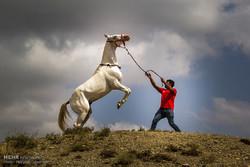1st Regional Turkmen Horse Beauty Festival