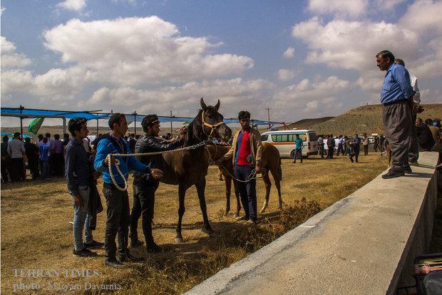 Noble Turkmen horse splendor festival makes debut in northeastern Iran