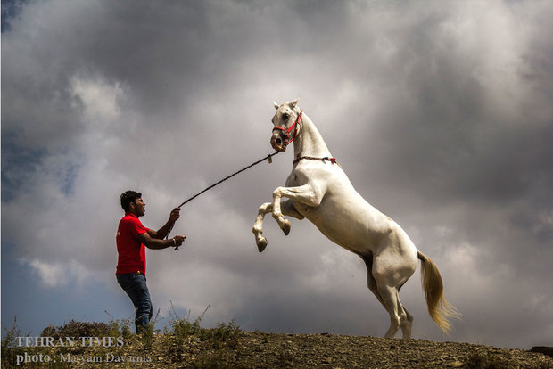 Noble Turkmen horse splendor festival makes debut in northeastern Iran