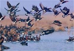 مراسم روز ملی پرندهنگری در سعدآباد برگزار میشود