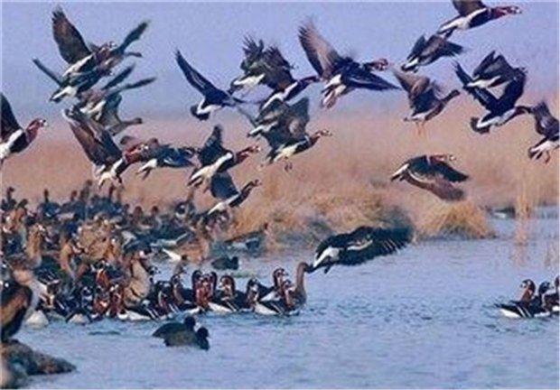 پایش بیماری آنفلوانزای فوق حاد پرندگان در زهک انجام می شود