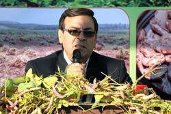 اهر ۵۰ درصد اراضی کشت لوبیا چیتی آذربایجان شرقی را در اختیار دارد