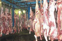 دلالان و کشتارگاهها گوشت را گران کردند/کمبود عرضه نداریم