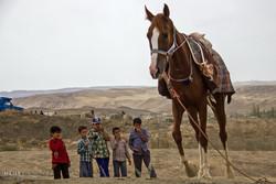 کرونا برگزاری جشنواره اسب اصیل ترکمن را لغو کرد