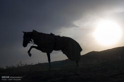 تلاش برای پرورش نژادهای اصیل اسب ایرانی