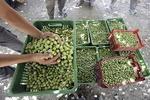 استان زنجان دارای ظرفیت بالا در بخش کشاورزی است