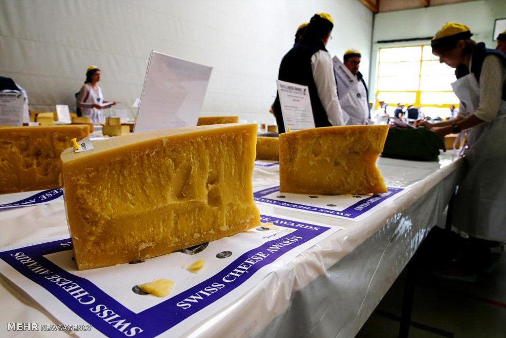 مسابقه انتخاب بهترین پنیر سوئیس