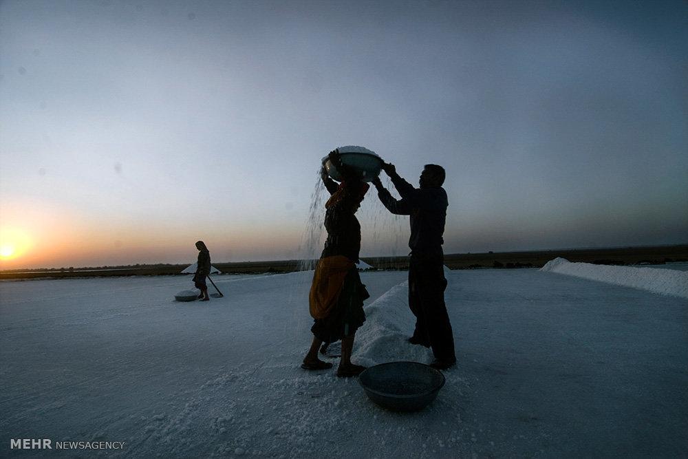 برداشت نمک در منطقه آگاریای هند