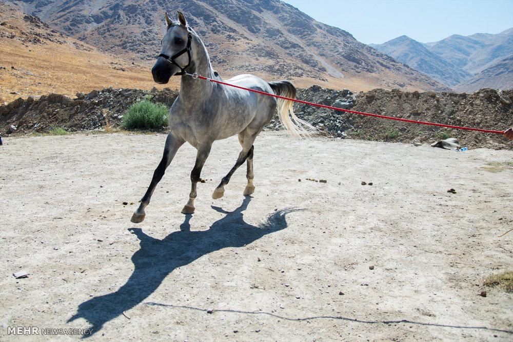 همایش زیبایی، رژه و سوارکاری اسب