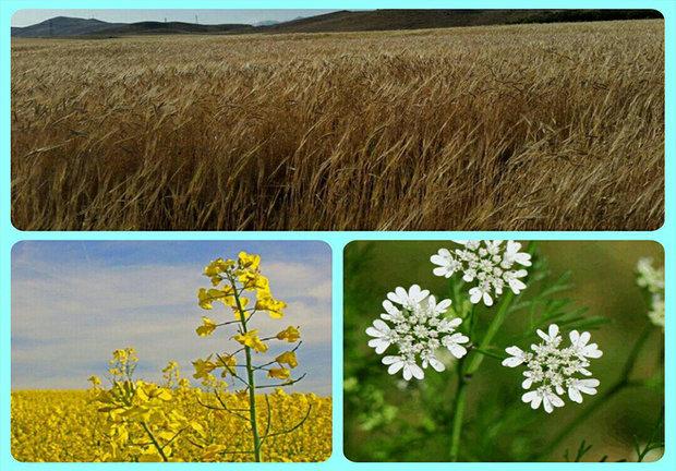 ۹۴۰ هزار تن محصولات زراعی در چهارمحال و بختیاری تولید شد