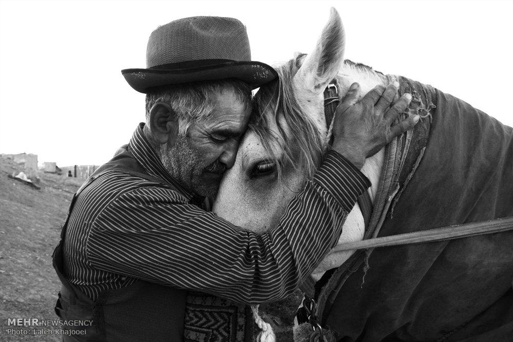 اسب، زندگی ، عشق