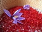 Iran's 5-month saffron exports up 5.7% yr/yr