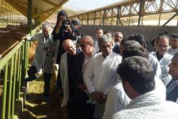 طرح پرورش گاو شیری در شهرستان آبیک  به بهره برداری رسید