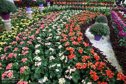 فعالیت فاز نخست پایانه صادراتی گل و گیاه از پایان سال آغاز می شود