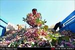 تغییرات اقلیمی چالش کشاورزی کرمان/ کشاورزان محصولات را بیمه کنند