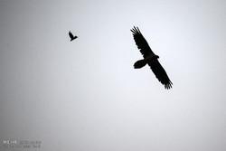 حديقة كلستان الوطنية في يوم الحيوان العالمي /صور