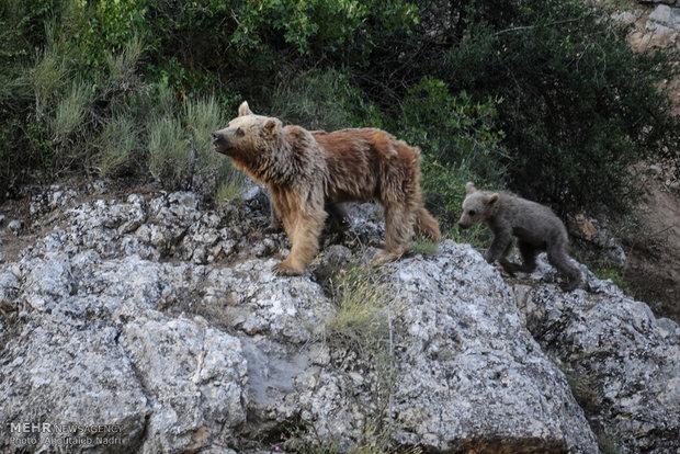 Golestan wildlife