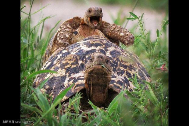 """الفائزون في مسابقة """"كوميديا الحياة البرية"""" للتصوير الفوتوغرافي"""