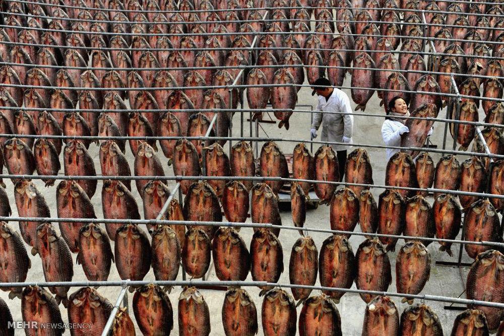 کارخانه های مواد غذایی در چین