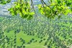 ايلام متحف لأقدم  اشجار البلوط في العالم