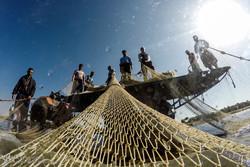 بدء موسم صيد الأسماك في بحر خزر /صور