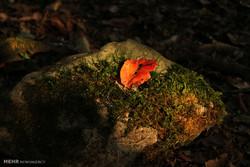 """منتزه غابة """"جوارم"""" يجسد جمالية الطبيعة الايرانية /صور"""