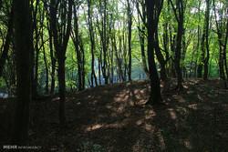 اسکان ۷۰۰۰ مسافر نوروزی در پارک های جنگلی آمل