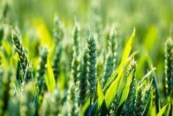 خام فروشی محصولات کشاورزی اردبیل متوقف شود