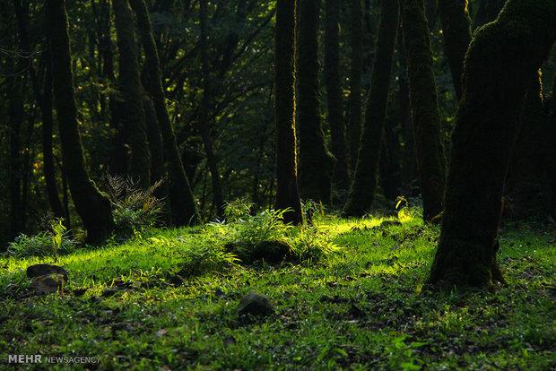 """حديقة """"جورام"""" الغابية جمالية الطبيعة الايرانية"""