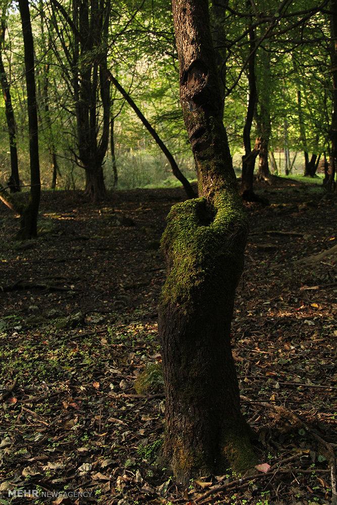 پارک جنگلی جوارم