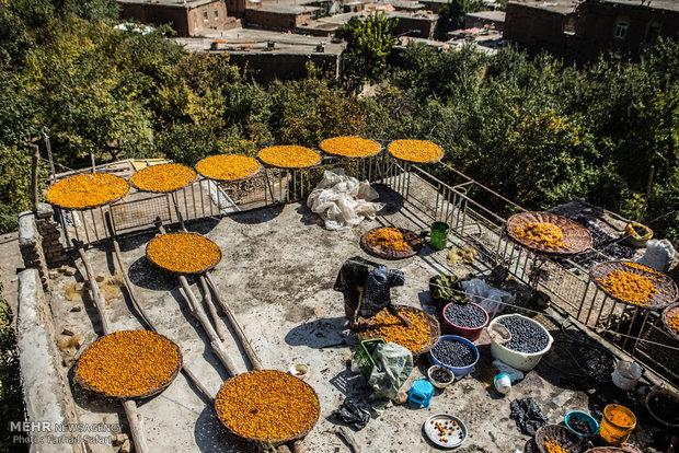 Kharv, prune capital of Iran
