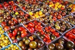 حل معمای بی مزه شدن گوجه فرنگی در یخچال