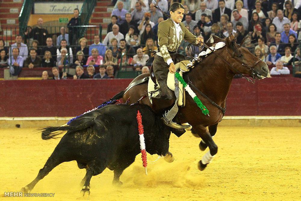 رقابت گاوباز زن با گاو وحشی
