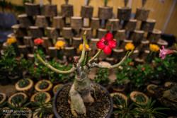 میزان تولید انواع گلهای فصلی در اردبیل افزایش مییابد