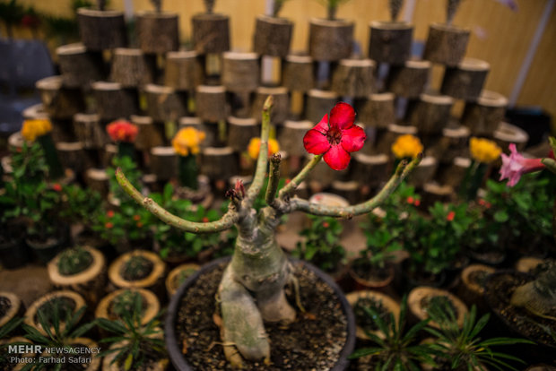 İran'da Bitki ve Çiçek Fuarı