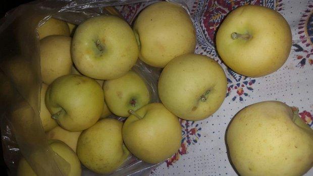 لزوم احراز تامین بودجه سیب های فاسدشده دماوند
