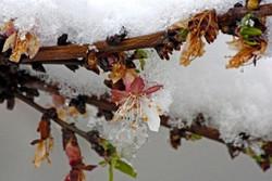 کشاورزی همدان ۸۰۷ میلیارد تومان خسارت دید/سرمازدگی در کمین باغها