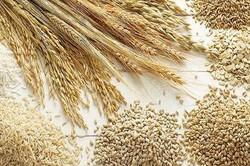 ايران ستصدر 3 مليون طن من القمح الفائض