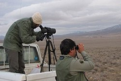 سرشماری پرندگان آبزی و کنار آبزی در آذربایجان غربی آغاز شد