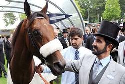 حاكم دبي ينفق 750 ألف دولار على سباقات الخيول في بريطانيا