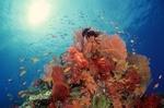 راز درمان سرطان در اعماق دریا/ فناوری زیستی با آبزیان توسعه می یابد