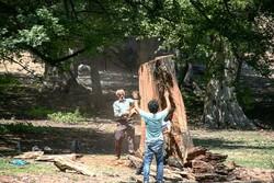 کانون های مصرف چوب قاچاق شناسایی شد/برچیدن کوره پزهای جنگلی