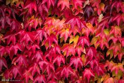ڕهنگامهیی پاییز