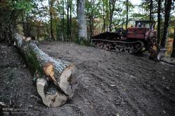 قطع و حمل بدون مجوز درختان جنگلی جرم است