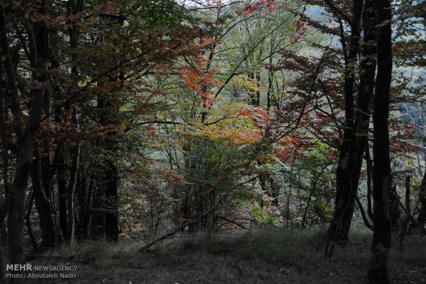 درختان زود رشد در قزوین کاشته می شود