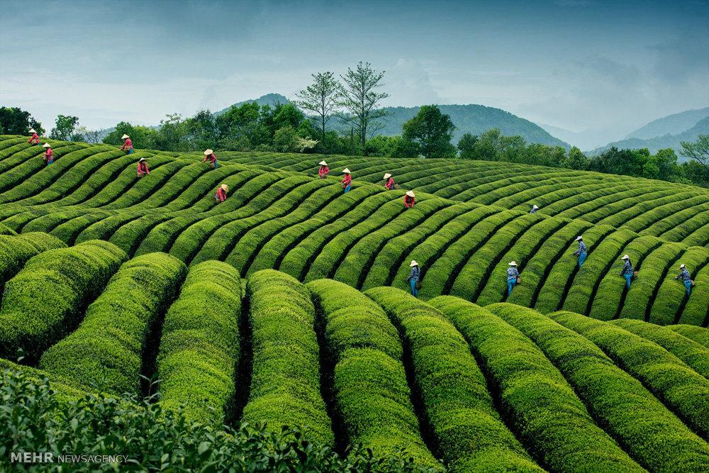 مسابقه بین المللی عکاسی سینا