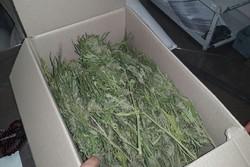 کشف ۱۱۰ کیلوگرم مواد مخدر گراس در ملایر