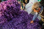 واگذاری مجوز حمل پیاز زعفران به نظام مهندسی کشاورزی خراسان جنوبی